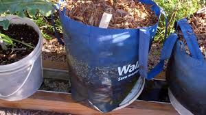 Bigs Pumpkin Seeds Walmart by Using A Walmart Shopping Bag As A Grow Bag On The Self Watering