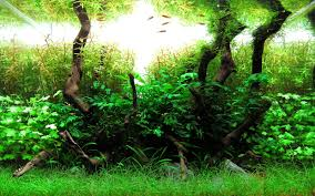 Gallery Aquascape With Ideas Image Home Design | Mariapngt The Green Machine Aquascaping Shop Aquarium Plants Supplies Photo Collection Aquascape 219 Wallpaper F Amp 252r Of The Month October 2009 Little Hill Wallpapers Aquarium Beautify Your Home With Unique Designs Design Layout New Suitable Plants Aquariums Pinterest Pics Truly Inspired Kinds Ornamental Aquascaping Martino Agostini Timelapse Larbre En Mousse Hd Youtube Beauty Of Inside Water Garden Inspirationseekcom Grass Flowers Beautiful Background