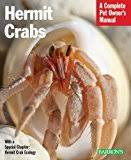 Halloween Hermit Crab Care by Do Halloween Moon Crabs Make Good Pets Find Out Here