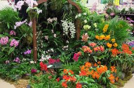 Naples Orchid Society Annual Show & Sale
