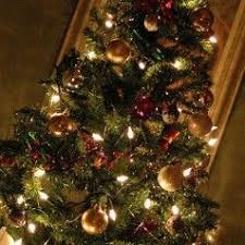 Mr Jingles Christmas Trees Gainesville Fl by The 25 Best Types Of Christmas Trees Ideas On Pinterest