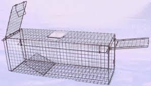 live cat trap search rescue