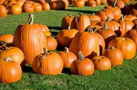 Pumpkin Patch Fort Worth Tx by Pumpkin Patch Themomsjournal Family Fun In Dfw Kids