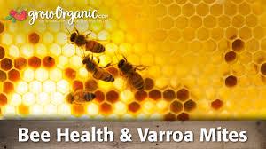 bee health varroa mite organic gardening