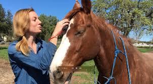 Horse Hair Shedding Tool by Striphair Gentle Grooming Kit Betty U0027s Best