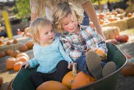 Pumpkin Picking In Ct by Picking Pumpkins Pumpkin Patches In Mooresville Nc On Point