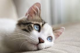 cat runny nose 5 common cat illnesses to for iheartcats