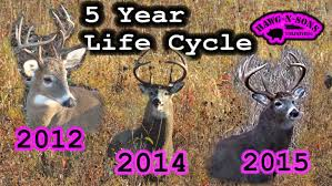 Deer Antler Shedding Cycle by Deer Hunting Facts Killer Head Shots Non Typical Whitetail Buck