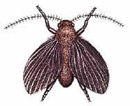 Little Flies In Bathroom Drain by Drain Fly Control Get Rid Of Drain Flies Orkin Com