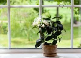 dormir avec une plante dans la chambre 12 plantes pour votre chambre à coucher pour vous aider à dormir