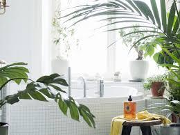 pflegetipps für pflanzen im badezimmer freundin de