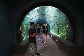 Moody Gardens unveils $37 million aquarium renovations Houston