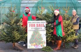 Christmas Tree Kmart Perth by Christmas Christmas Tree Sale Scene Sales Fundraiser Idea