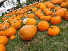 Oak Glen Pumpkin Patch Address by Pumpkin Patches Corn Mazes In The Chicago Area Orland Park Il