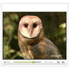 An Introduction To Barn Owls Video | Carolina.com Lets Talk About Birds Barn Owl Pittsburgh Postgazette Couple Owls Stock Photo 30126931 Shutterstock Watch The Secret To Why Barn Owls Dont Lose Their Hearing New Zealand Online Let You Know Birdnote Owl John James Audubons Of America Information Found Suffer No Loss As They Age Facts Pictures Diet Breeding Habitat Behaviour Baby Youtube