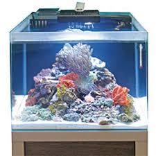 aquarium nano eau de mer aquarium d eau de mer une réfléchie animalerie