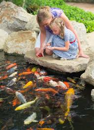 Pond Fish For Your Backyard Pond | Blain's Farm & Fleet Blog Garnedgingsteishplantsforpond Outdoor Decor Backyard With A Large Fish Pond And Then Rock Backyard 8 Small Ideas Front Yard Ponds Backyards Wonderful How To Build For Koi Loving And Caring For Our Poofing The Pillows Project Photos Ideasnhchester Rockingham In Large Bed Scanners Patio Heater Flame Tube Beautiful Classical Design Garden Well Cared Indoor Waterfall Eadda Lawn Style Feat Artificial 18 Best Diy Designs 2017