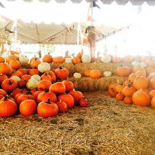 Pumpkin Patch Corona Ca by Group Events At Frosty U0027s Forest Christmas Trees U0026 Pumpkin Patch