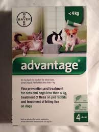 flea treatment for cats advantage ii flea treatment for small dogs 10lbs ebay