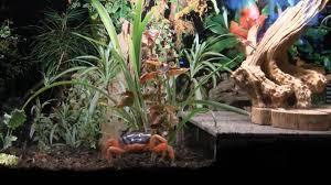 Halloween Hermit Crab by Halloween Crabs 05 16 2010 Youtube
