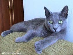 russian cat names 12500 cat names for your kitten e