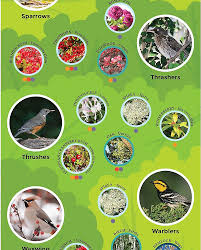 Using Plants To Attract Birds To Your Garden Marketplace Audubon Mason Bees Backyard Bird Shop Sibleys Birds Of The Midatlantic Southcentral States Amazoncom In Garden Wall Calendar 2018 Home Page The House Ny 97 Best Michaels Craft Store Coupons Discounts Images On Wild Fersbirdseed Blendsnature 25 Unique Birds Unlimited Ideas Pinterest Stained Glass Patterns 01557013429 Predator Guide Protect Your Yard Little Book Songs Andrea Pnington Caz