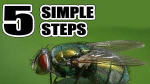 How To Get Rid Of Flies In The House Naturally With 5 Simple Steps ... 25 Unique Flies Outside Ideas On Pinterest Sliding Doors How To Prevent Mosquitoes In Your Back Yard Infographic Images On New Do You Get Rid Of The Backyard Architecturenice Outdoor Goods Mix These 2 Ingredients And House Will Be Free Of Flies Organically Why Are Dangerous To Of Them Brody Pintology Pine Sol As Fly Repellant And Picture Fascating In The Naturally With 5 Simple Steps