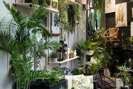 dschungel im wohnzimmer mit zimmerpflanzen kommt natur ins