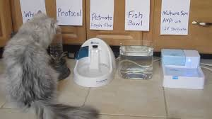 water for cats cat water bowl testing review documentary