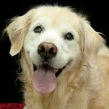 Dogs That Shed Minimally by Adopting A Pet U2013 Finding The Right Dog For You And Your Family