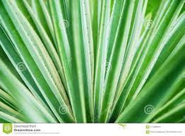100 Natural Geometry Cactus Aloe Vera Closeup Background The Concept Of