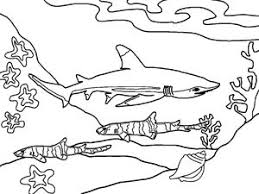 Great White Shark Coloring Page For Kids