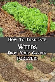 How To Eradicate Weeds From Overtaking Your Garden Easy Gardening Pallet GardeningVegetable