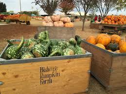 Best Pumpkin Patch Near Roseville Ca by Love Where You Live Bishop U0027s Pumpkin Patch
