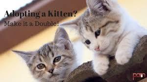 adopt a cat adopting a kitten make it a