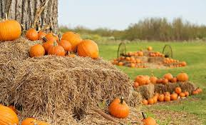 Free Pumpkin Patch In Katy Tx by 5 Fall Fun Pumpkin Patches Festivals Corn Mazes U0026 More
