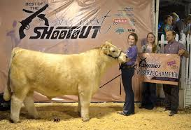 Best Of The Southwest Shootout | Overall Market Animals | The Pulse 1021cattle6ajpg Purple Reign Cattle Company Online Sale The Pulse February 2017 Texas Longhorn Trails Magazine By A Good Place To Be Cow At Fort Worth Stock Show Animals Are Commercial And Registered Ozarks Farm Neighbor Newspaper Cattlemen Opmistic About Resumed Beef Exports To China News Blog Lautner Farms Experience The Value Best Of Southwest Shootout Overall Market Burke Hidin In Sand Steer November 2015 Graham Livestock Auction Sanctioned Shows Ijbba Iowa Junior Beef Breeds Association