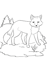 Arctic Animal Coloring Pages Corresponsables Co