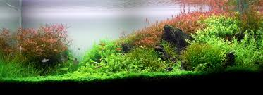 AquaScaping World Magazine - Aquascaping With Nicolas Guillermin An Inrmediate Guide To Aquascaping Aquaec Tropical Fish Most Beautiful Aquascapes Undwater Landscapes Youtube 30 Most Amazing Aquascapes And Planted Fish Tank Ever 1 The Beautiful Luxury Aquaria Creating With Earth Water Photo Planted Axolotl Aquascape Tank Caudataorg 20 Of Places On Planet This Is Why You Can Forum Favourites By Very Nice Triangular Appartment Nano Cube Aquascape Nature Aquarium Aquascaping Enrico A Collection Of Kristelvdakker Pearltrees