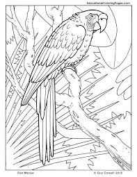 Macaw Coloring Pages Birds
