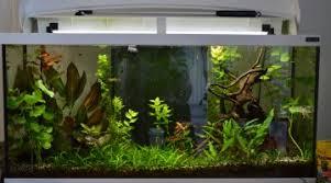 ph aquarium eau douce petits poissons calmes supportant un ph supérieur à 7 avec un