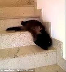 cat stairs cat of feline who thinks it s a snake slithering stairs