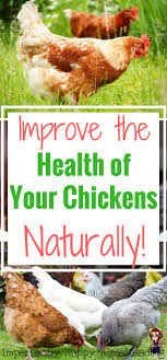 532 Best Farm Life Images On Pinterest | Chicken Coops, Raising ... Why Should You Compost Chicken Manure Is Naturally High In 1105 Best Backyard Project Images On Pinterest Raising Baby Chick Playground Coops Pet Chickens And Worming Backyard Controversial Here Are Tips How To Naturally Treat Coccidiosis Your Chickens Natural Treatment Of Vent Prolapse Ducks 61 To Me Raising Means Addressing Healthkeeping Deworming Homesteads