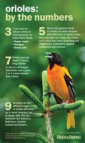 349 Best ღ•*¨*•ღ οrιοlε ζεεδεrs ღ•*¨*•ღ Images On Pinterest ... The Joy Of Bird Feeding Essential Guide To Attracting And Birders Break Records For Great Backyard Count Michigan Radio New Guides Backyard Birding Add Birders Joyment Aerial Birds Socks Absolute Birding Co East Petersburg Shopping Authentic Common Redpoll Photosgreat South 100 Watcher Attract To Your Best 25 Watching Ideas On Pinterest Pretty Birds In Burlington Vermont Photos In Winter Get Ready For Photo 20 Best Birdfeeders Images Feeding Station