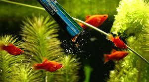 aquarium d eau douce jbl plankton pur m 8 x 5g plancton frais et pur pour poissons d