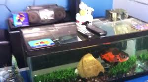 Homemade Lava Lamp Fish Tank by Fish Aquarium Coffee Table U2013 Golead