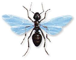 The Difference between Termites and Winged Ants