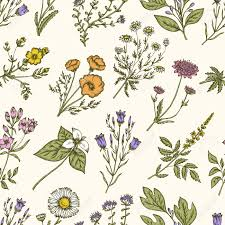 Wild Flowers And Herbs Seamless Floral Pattern Botanical Drawing