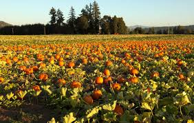 Best Pumpkin Patch Snohomish by 5 Great Pumpkin Patches Around The Sound