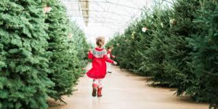 Portland Tree Care Advice News